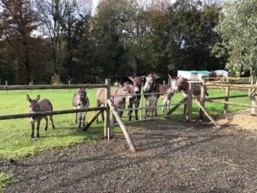 Nos ânes sont arrivés en Côtes d'Armor !!