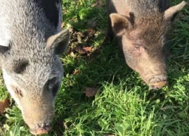 La Combe aux Ânes prépare son projet de mini ferme en Bretagne !